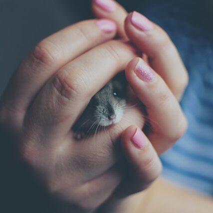 animal-baby-blur-325490 (1)